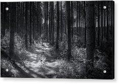 Pine Grove Acrylic Print by Scott Norris