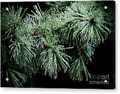 Pine Needles In Ice Acrylic Print by Betty LaRue