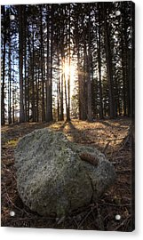 Pine Rock Acrylic Print by Ed Cilley
