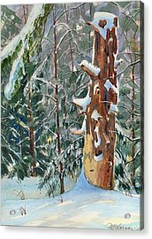 Pine Sentinel Acrylic Print by David Gilmore
