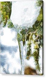 Pine Snow And Ice Acrylic Print