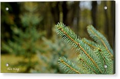 Acrylic Print featuring the photograph Pine Tree by Alex King