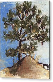 Pine Tree Acrylic Print