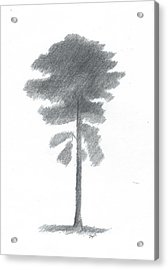 Pine Tree Drawing Number Four Acrylic Print by Alan Daysh
