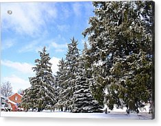 Pine Tree Haven Acrylic Print by Frozen in Time Fine Art Photography