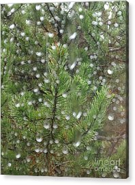 Pine Tree In The Rain Acrylic Print by Laura  Wong-Rose