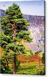 Pine Tree In Wicklow Hills. Ireland Acrylic Print by Jenny Rainbow
