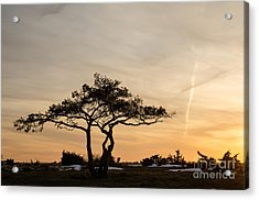 Acrylic Print featuring the photograph Pine Tree Portrait by Kennerth and Birgitta Kullman