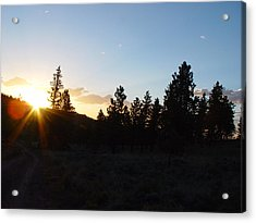 Pine Tree Sunset Acrylic Print by Mark Russell
