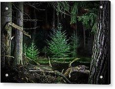 Pine Trees New Life Acrylic Print
