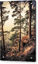 Pine Trees Of Holy Island Acrylic Print by Jenny Rainbow