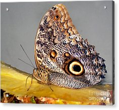 Pineapple Butterfly Acrylic Print by Leslie Cruz