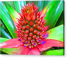 Pineapple Express Acrylic Print by Scarekrowe Karratti