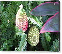 Acrylic Print featuring the photograph Pineapple Ginger by Belinda Lee