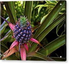 Pineapple Royal Acrylic Print