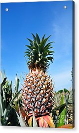 Pineapple Acrylic Print by William Voon