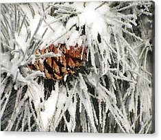 Pinecone In Snow Acrylic Print by Steven Parker