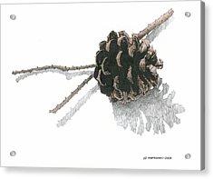 Pinecone Acrylic Print by Paul Shafranski