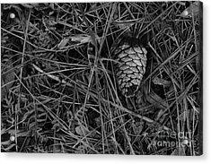 Pinecone Acrylic Print