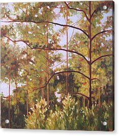 Pines Acrylic Print by Carlynne Hershberger