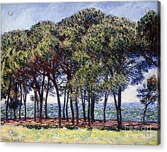 Pines Acrylic Print by Claude Monet