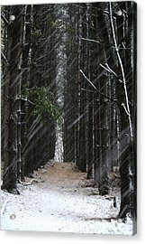 Pines In Snow Acrylic Print