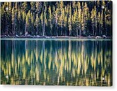 Pines Reflected In Tenaya Lake Acrylic Print