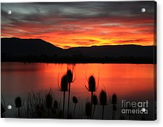Pineview Dawn Acrylic Print