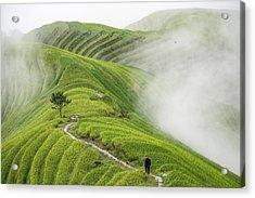 Ping'an Rice Terraces Acrylic Print by Miha Pavlin