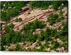 Pink Acadia 8103 Acrylic Print by Brent L Ander