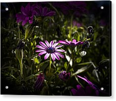 Pink Acrylic Print by Amr Miqdadi