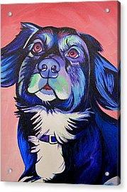 Pink And Blue Dog Acrylic Print by Joshua Morton