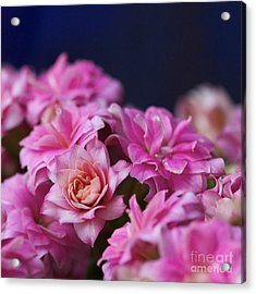 Pink And Blue II Acrylic Print by Pamela Gail Torres