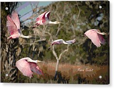 Pink And Feathers Acrylic Print