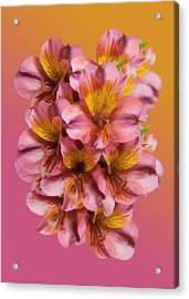 Pink And Gold Acrylic Print by Delores Knowles