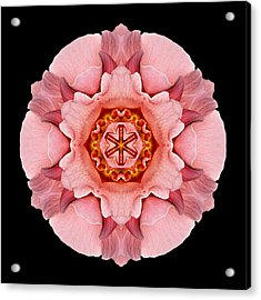 Acrylic Print featuring the photograph Pink And Orange Rose Iv Flower Mandala by David J Bookbinder