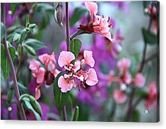 Pink And Purple Acrylic Print by Arkamitra Roy