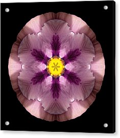 Acrylic Print featuring the photograph Pink And Purple Pansy Flower Mandala by David J Bookbinder