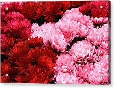 Pink And Red Acrylic Print by Menachem Ganon