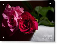 Acrylic Print featuring the photograph Pink And Red Rose by Matt Malloy