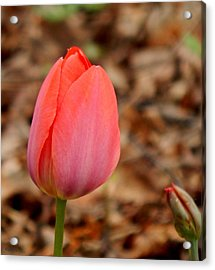 Pink And The Bud Acrylic Print by Wild Thing