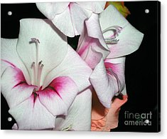 Pink And White Beauties Acrylic Print