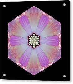 Acrylic Print featuring the photograph Pink And White Hibiscus Moscheutos I Flower Mandala by David J Bookbinder