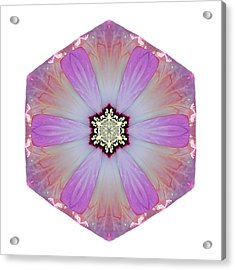 Pink And White Hibiscus Moscheutos I Flower Mandala White Acrylic Print