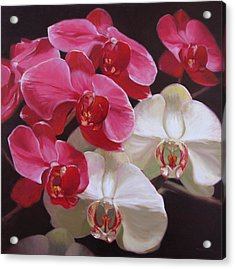 Pink And White Orchids Acrylic Print by Takayuki Harada