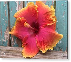 Tropical Pink And Yellow Hibiscus  Acrylic Print