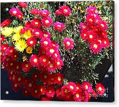 Pink And Yellow Wildflowers Acrylic Print