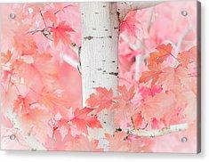 Pink Aspen Acrylic Print by Daniel Huerlimann