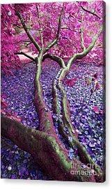Pink Autumn Acrylic Print by Sally Barnett