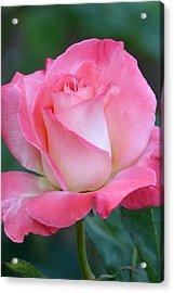 Pink Awakening Acrylic Print